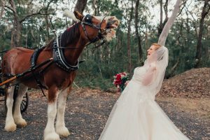 Horse and carriage Canberra weddings